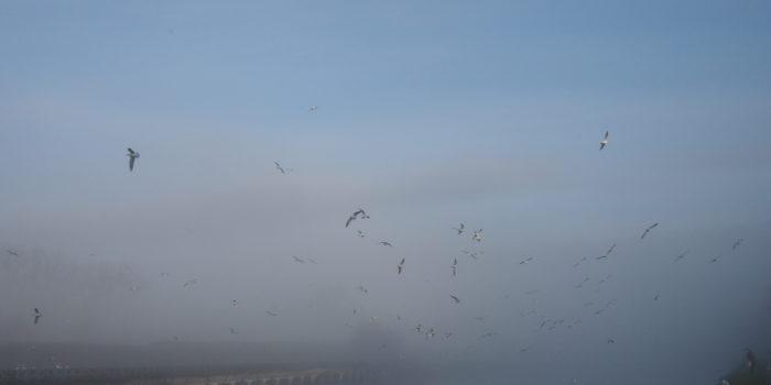 Vogels In De Lucht
